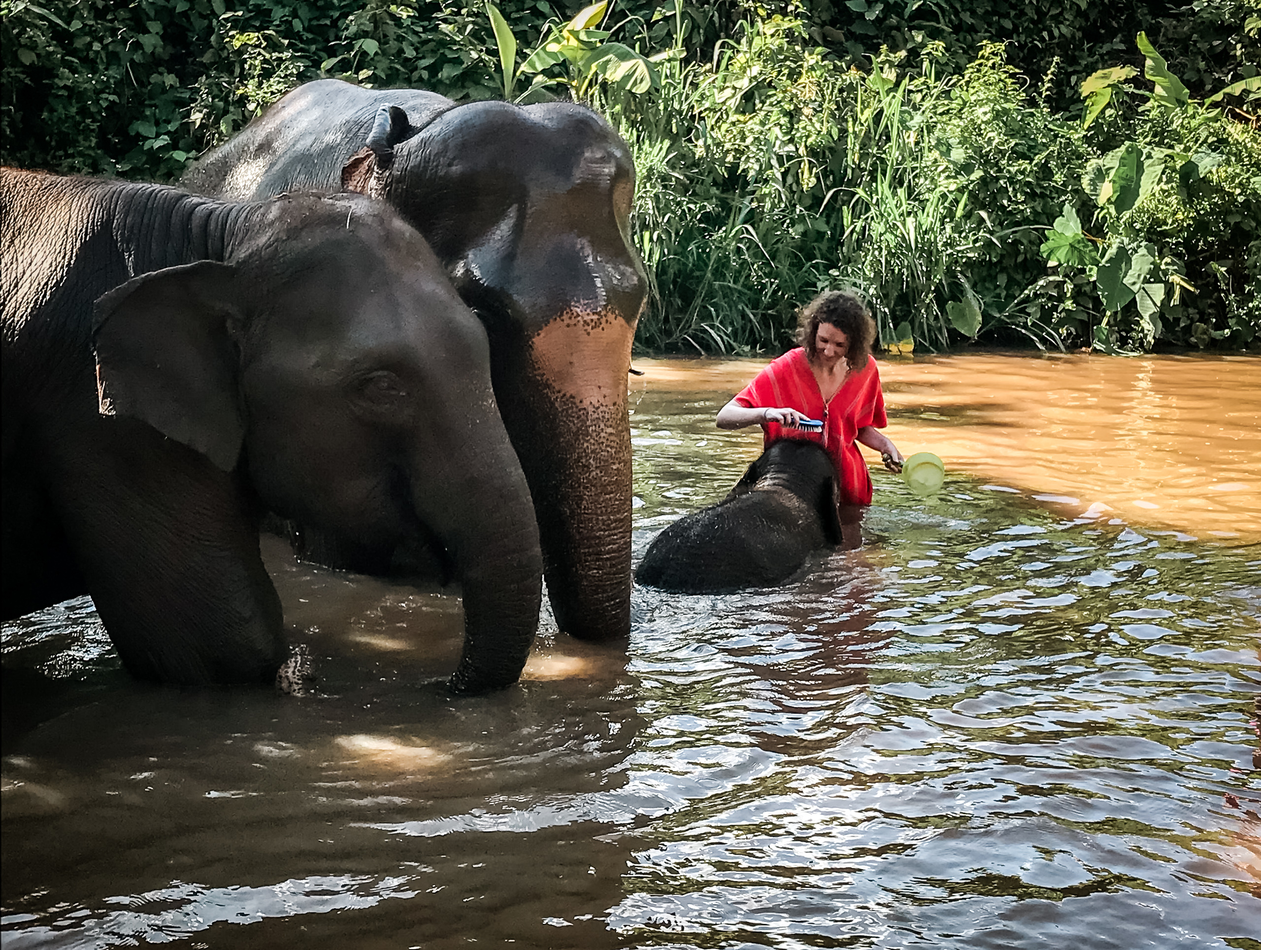 Backpacker Trip durch Thailand und Laos - Chiang Mai - Bamboo Elephants Family Care