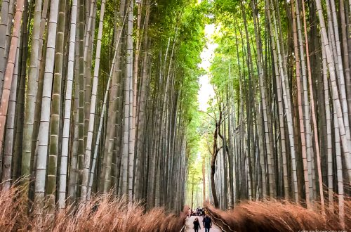 Kyoto-Japan-Bamboo-Forest